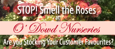 ODowd Nurseries - Specialising in Roses