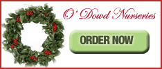 ODowd Nurseries christmas wreaths