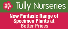 Tully Nurseries -JUST ARRIVED -Fantasic Selection of Italian Specimen Plants