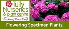 Tullys Nurseries-Flowering Specimen Plants!