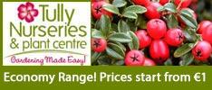 Tullys Nurseries-Economy Range! Prices start from €1