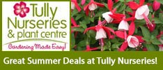 Tullys Nurseries-Long flowering plants to extend Irish Summer!