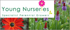 YOUNG NURSERIES – TRADE ONLY Young Nurseries is a wholesale nursery based in the scenic Ballyhoura region of Co. Limerick. Established in 1988, we are one of the premier suppliers in Ireland of a vast range of Irish grown Perennials and Alpines, Herbs and Grasses.